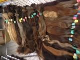 Fotogalerie vlasů určených pro prodlužování vlasů Vlasy k produžování 17